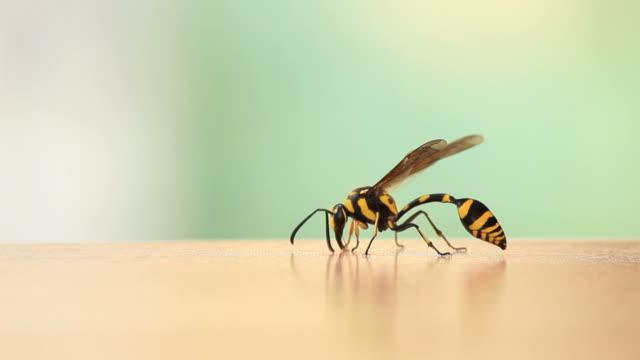 Danger Wasp.
