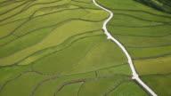 Daraeng-i Terraced paddy field