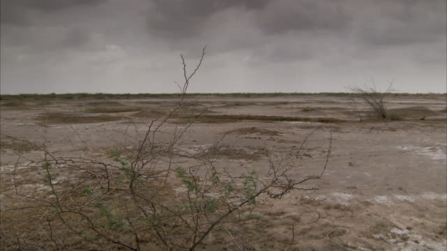 Dark clouds drift over the desolate landscape of the Little Rann of Kutch. Available in HD.