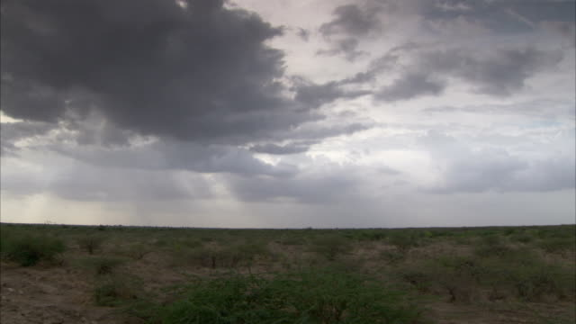 Dark clouds drift over the salt marsh of Little Rann of Kutch. Available in HD.