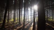 Dark coniferous forest