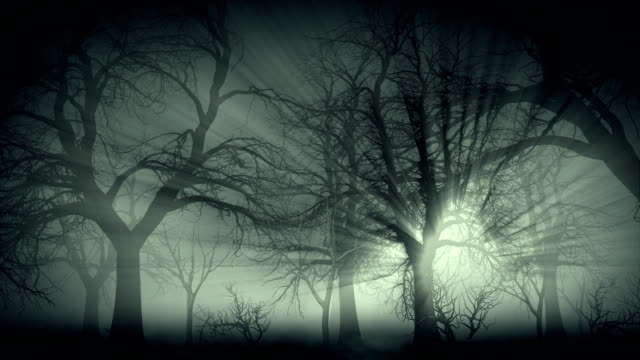 Dark forest in mist
