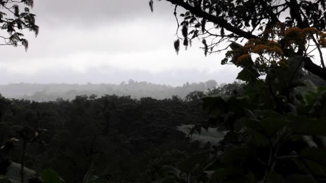 Dark Skies in Cloud Forest in Africa Pull