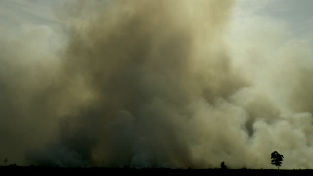Dark smoke from forest fire in Sumatra Indonesia