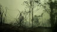 Dark smoke in the forest