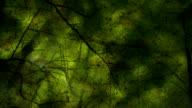 BEECH TREES IN AUTUMN : dark (seamless loopable)