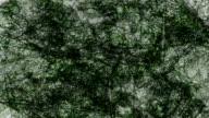 ERRATC BACKGROUND - TRANSLUCID LEAVES :  dark (LOOP)