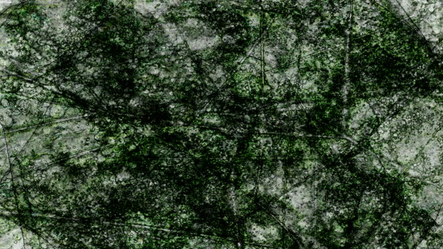 ERRATC BACKGROUND - TRANSLUCID LEAVES :  dark (LOOP)