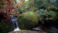 Dartmoor Stream in Autumn