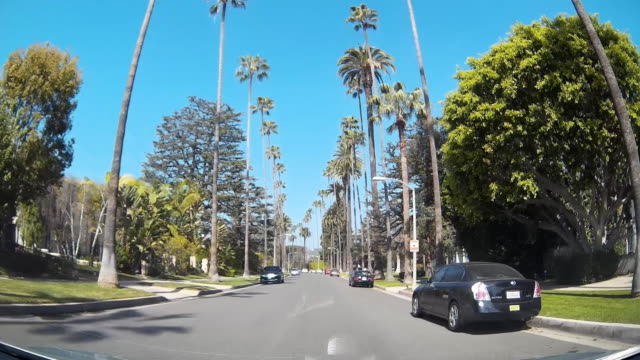 Dashcam View of Hollywood Palm Tree Street