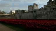 David Cameron plants poppy at Tower of London poppy installation ENGLAND London Tower of London EXT Close Shots and GVs of ceramic poppies at Tower...