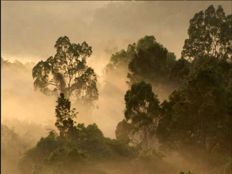 Dawn over misty forest East Africa