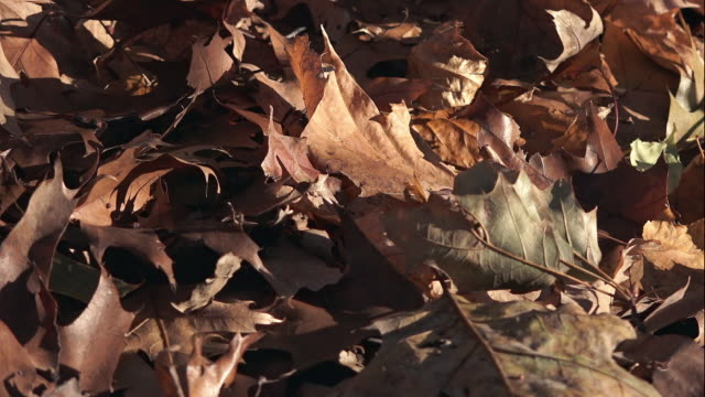 Dead Autumn Leaves on the Ground