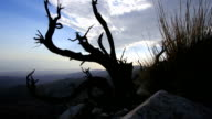 Dead juniper bush time lapse e Valle di Coachella