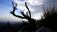 Dead juniper bush time lapse and Coachella Valley