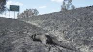MS Dead kangaroo beside of near highway  / Victoria, Australia