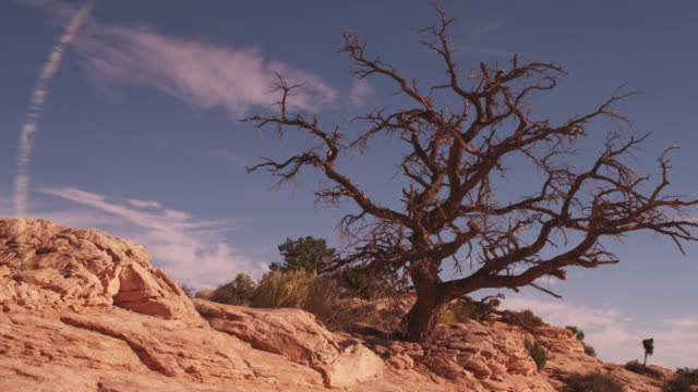 Dead tree in barren desert landscape