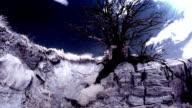 dead tree (infrared)