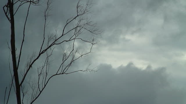 Dead trees and Storm clouds