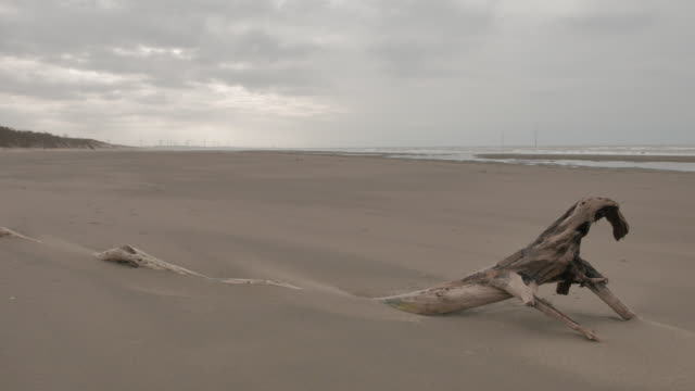 Dead wood covered by blowing sand in beach