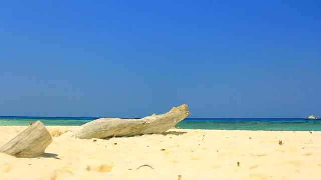 Deadwood on the beach