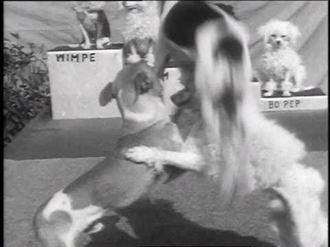 December 9, 1935 WS Small dogs performing tricks / Venice, California