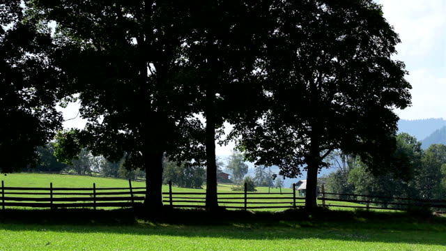 Deciduous trees with fence