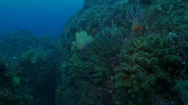 Deep sea pinnacle with colorful coral