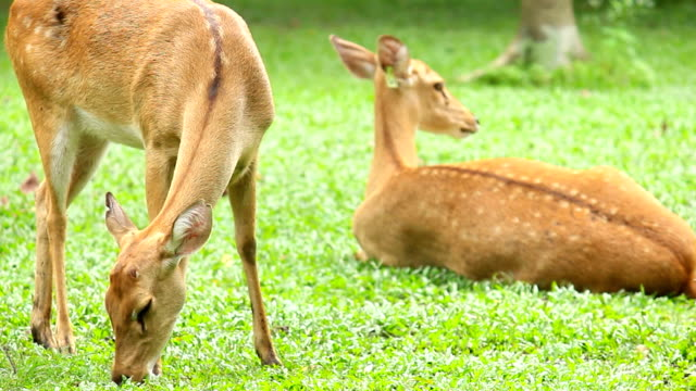 deer grazing on green grass field