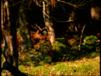 A deer hides in the forest.