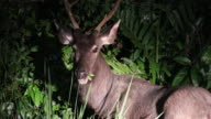 Deer in the forest at night.