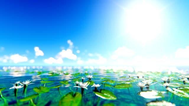 Defocused water flowers