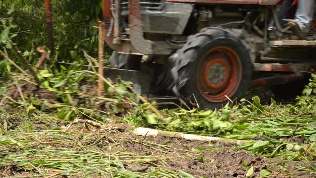 Deforestation for Agricultural Area