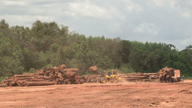 Deforestation in Amazon Rainforest
