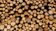 Abholzung Forstwirtschaft