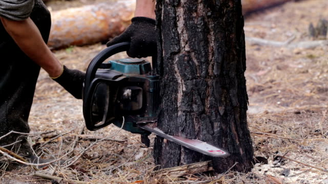 Deforestation. Lumberjack is sawing tree chainsaw.