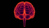 HD : 360 degree X-ray Brain.