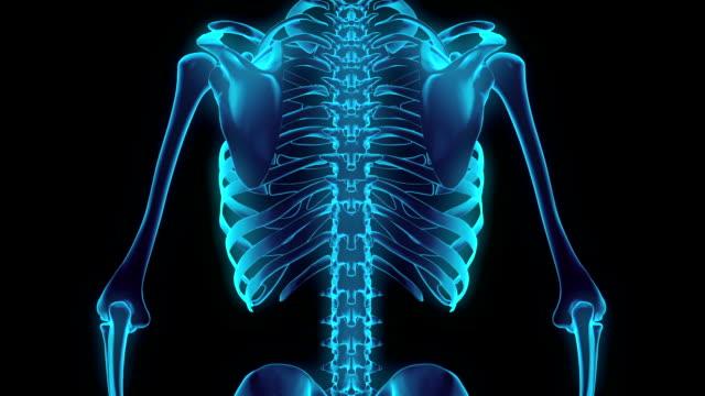 HD : 360 degree X-ray Chest Skeleton.