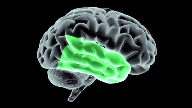 HD : 360 degree X-ray part of Brain.