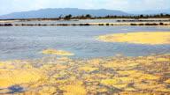 Delta del Ebro Lake, with algal mat in surface.