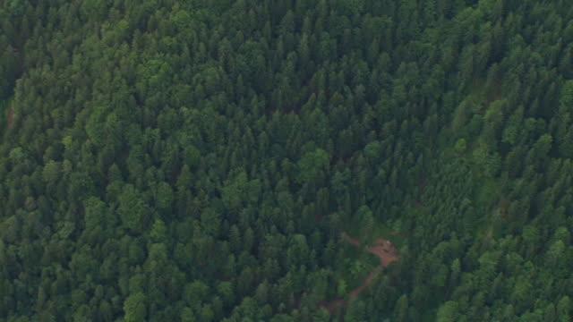 HD: Dense forest
