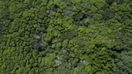 Dense green forest moving in the wind, aerial