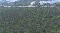 A dense mangrove forest grows on a hillsides near Dhaka Bangladesh. Available in HD.