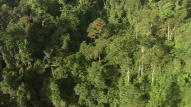 Dense trees thrive in a Costa Rican rainforest.