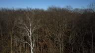 Descending Shot of Dry Leafless Treetops