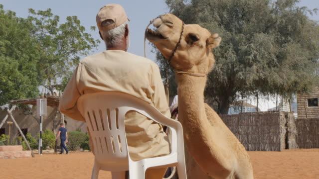 Desert and camel compound, Emirates Heritage Village, Abu Dhabi, United Arab Emirates, Middle East, Asia