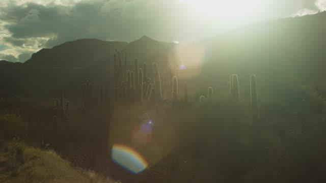 Desert Cacti at Sunset