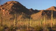 Desert Landscape in Saguaro National Park