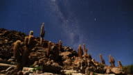 Desert Night Sky and Cactus Forest