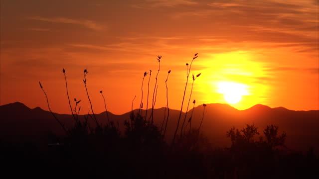 Desert Sunset in Saguaro National Park